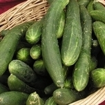 Cucumber-Marrow