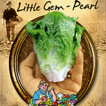 Lettuce Little Gem - Pearl