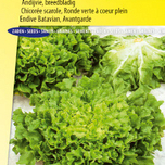 Endive seeds Batavian, Avantgarde Winter