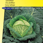 Savoy cabbage Winterking 2