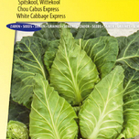Head cabbage seeds for sale