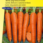 Carrot seeds Berlikumer 2 (Long Autumn and Winter)