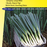 Onion bunching / welsh, Ishikura Long White