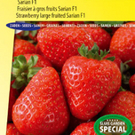 Strawberry Sarian F1 (large fruited)