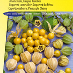 Pineapple Cherry SunFruit (Cape Gooseberry)