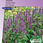 Anise Hyssop Blue Spike