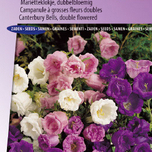 Canterbury Bells medium Double Mix