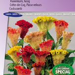 Celosia seeds for sale