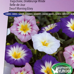 Morning Glory (Convolvulus) dwarf Choice Mix