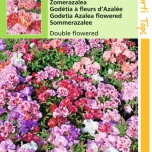 Godetia, Farewell-to-spring double fl. azalea mix