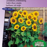 Sunflower semi-tall Prado Gold