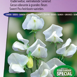 Sweet pea Dorothy Eckford 1903 (Heirloom variety)