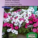 Petunia, hedging and trailing F1 Tidal Wave SIlver & Cherry