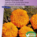 Marigold, African tall double Hawaii (orange)