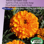 Marigold, African dwarf double Golden Age (Orange)