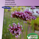 Garden Vervein Purple Top, tall
