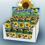 Green gift Sunflower 40 pcs in showbox