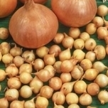 Onion sets Sturon (1kg)
