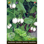 Specialties Egg Plant White Eggs
