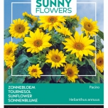 Sunny Flowers – Helianthus Debilis Stella Yellow