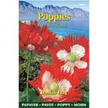 Poppies of the world - Papaver Paeoniflorum Danish Flag