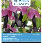 Flowering Climbers Rhodochiton Purple Bells