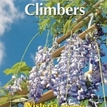 Flowering Climbers Wisteria Blue