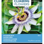 Flowering Climbers Passiflora caerulea - Passion Flower