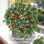 House Plants Capsicum Annuum Dwarf mixed