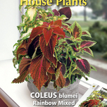House Plants Coleus Rainbow mix