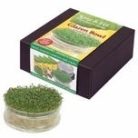 Sowing Cress Indoors Set Glass