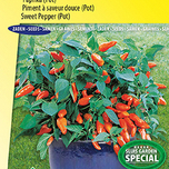 Sweet pepper Tangerine Dream F1 (pot) Capsicum