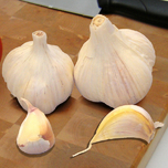 Garlic Sativum