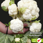 Cauliflower Multi-Head F1