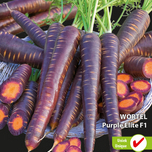 Carrot Betasweet Purple Elite F1 (Halflong Summer and Autumn)