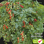 Tomato seeds for sale
