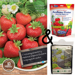 Cultivation package Strawberry Ostara