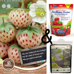 Cultivation package Strawberry White Pineberry
