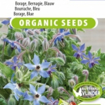 Borage Blue EKO (Borago officinalis)