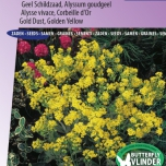 Alyssum Golden Fall - Gold Dust