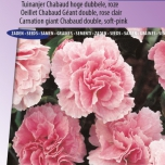 Carnation La France – Dianthus Chabaud
