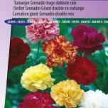Carnation Grenadin Mix – Dianthus