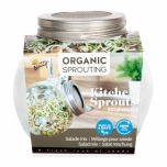 Organic Sprouting glass pot - Salad Mix