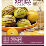 Pepino Melon pear - Xotica Collection