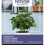 Coffea Arabica, Arabian coffee - Buzzy House Plants
