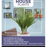 California Desert Fan palm - Buzzy House Plants