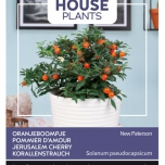 Jerusalem Cherry New Paterson - Buzzy House Plants