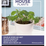 Sensitive Plant Mimosa - Buzzy House Plants